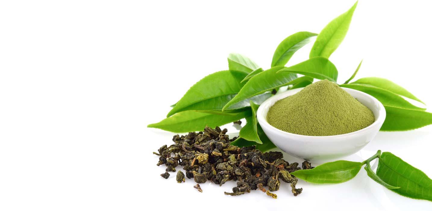 Green Tea Extract – Epigallocatechin gallate (EGCG)